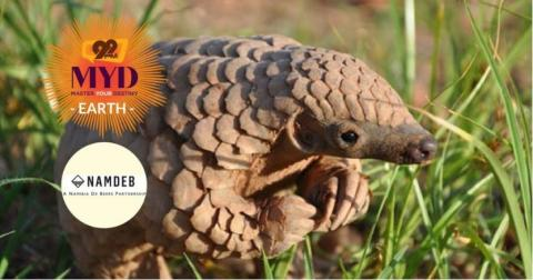 Scaling Up to Save the Pangolin